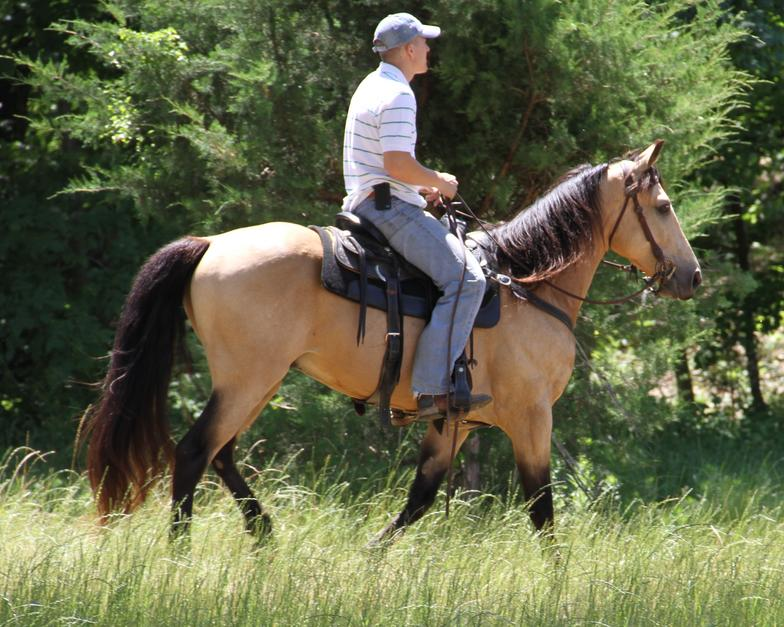 how to ride a gaited horse